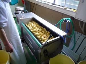 根菜洗浄器